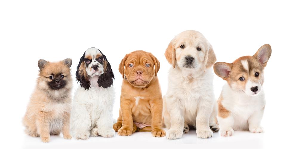 בנפט תנו לחיות לחיות' במטרה לעודד אימוץ כלבים DS-48
